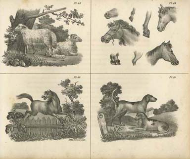 Pl. 48-51. Crayon lithograph printed by John Collins, in N. Whittock, The Oxford Drawing Book, or, The Art of Drawing, and the Theory and Practice of Perspective (New York: Collins, Keese & Co., 1840).
